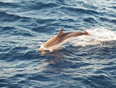 Delfines-en-Grecia (Aproache2012) Tags: navegar mediterraneo cicladas peloponeso flotilla familar niños vacaciones relax