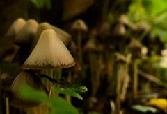 Herfst in het Vliegenbos (Skylark92) Tags: nederland netherlands holland amsterdam noord vliegenbos mushroom paddestoel herfst autumn forest bos