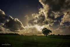 16/31 Chaldon (Alex Chilli) Tags: chaldon surrey coulsdon field view vista landscape sky clouds sun flare burst green tree cloudy