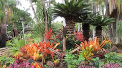 Maui Tropical Plantation (Stabbur's Master) Tags: hawaii hawaiianislands maui mauitropicalplantation