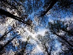 In the wood (-Aldievel-) Tags: autumn trees sky blue light clouds tree fall green wood italy italia molise montagne sud monti boschi alberi bosco south foglie matese