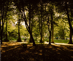 A walk in the park... (chris athanasiou) Tags: leaves landscape wales uk nature couple trees colors park sun shadow cardiff light