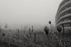 Brouillard (RW-V) Tags: canoneos70d canonefs1755mm28isusmlens apeldoorn brouillard fog mist misty eenmistigedag noiretblanc monochrome bw nb zw sw 80faves 100faves 120faves 150faves 175faves 200faves