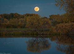 Fall supermoon rise (Bill Bowman) Tags: fullmoon moonrise supermoon huntersmoon