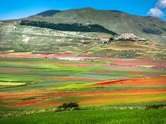 Blossoming in Castelluccio di Norcia (StefanoLaureti) Tags: blossoming landscape norcia castelluccio italia italy colors