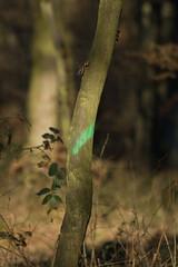 ckuchem-7133 (christine_kuchem) Tags: abholzung baum baumstmme bume einschlag fichten holzeinschlag holzwirtschaft wald waldwirtschaft