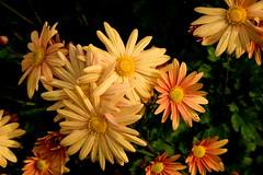 JJN_3096 (James J. Novotny) Tags: chicago conservatory botanical gardens garden flowers flower nikon d750 path paths skokie lagoons