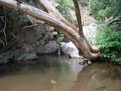 012Tarjnka-szurdok (ossian71) Tags: magyarorszg hungary mtra termszet nature szurdok canyon tjkp landscape vzpart water