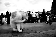 dci_003 (la_imagen) Tags: trkei turkey trkiye turqua istanbul istanbullovers eminn sokak sw bw blackandwhite siyahbeyaz street streetandsituation streetlife strasenfotografieistkeinverbrechen monochrome streetphotography cat katze kedi