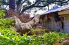 Hurricane Matthew Damage DSC_0296_edited-1 (John Dreyer) Tags: hurricanematthew hurricane damage nikon nikond5100 insurance copyright2016johnjdreyer photocreditjohnjdreyer