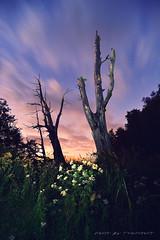 DSC_7619 (辛同學) Tags: 新中橫 夫妻樹 塔塔加 台21線 trees night clouds longexposure nikond4s sunset sky
