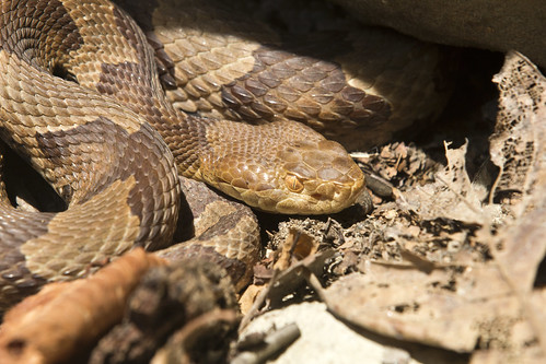 Copperhead Close