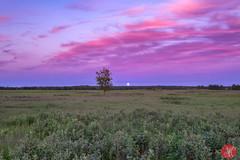 When Strawberry Moon rises (Kasia Sokulska (KasiaBasic)) Tags: fujix canada alberta elkislandnp landscape summer moonrise bizonloop sky nature strawberry moon tree meadow