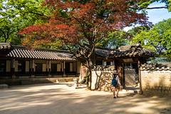 Secret Garden (clogette) Tags: changdeokgungpalace secretgarden architecture seoul palace southkorea korea kr