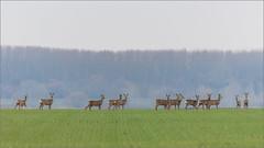 DSC_1180a (Viktor Honti) Tags: nikon d800 tamron 150600 wildlife nature dc hungary