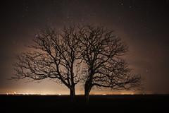 The Twins under the stars (Budoka Photography) Tags: tree stars starheaven nightphoto night nightsky sky outdoor manual longexposure le legacylens silhouette serene dusk nightlights nightshot evening nature landscape tripod canonfd20f28 wideangle sonyalphailce7rm2 7dwf