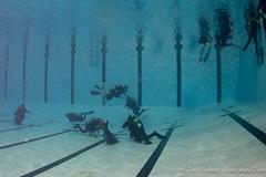 Sortie plonge EPSO - Piscine de Gatineau (Classicpixel (Eric Galton) Photography Portfolio) Tags: epso gatineau plonge dive diving diver padi cmas naui sidemount discovery fins tank scuba ericgalton