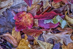 mixed greens (Pejasar) Tags: autumn fall nd ground color array