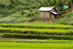 20161013-IMG_1868 (Konrad K. M.) Tags: myanmar kalaw shan