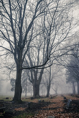 Foggy mornings are for digging... (AxelBergeron) Tags: graveyard cemetery cimetire mort fog foggy brouillard morning matin fall winter hiver automne morbid morbide lugubre dark tomb tombe tombstone pierretombale dead death tree trees arbres arbre branches branch sonya5000 a5000 sel1650