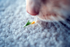 Tiny#7-1 (Hamid.A) Tags: flower macro nature colors yellow closeup spring soft dream hues tiny smallflower