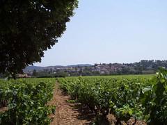 vue-village-et-vigne