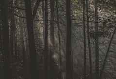 Evenings (Joshua Taylor Mason) Tags: camping trees light sunset wild summer sky nature beautiful beauty leaves fog forest vintage landscape outside outdoors woods pretty natural hiking kentucky hipster foggy sunny retro wilderness sunrays