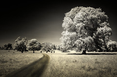 Trees (Enzo Cositore Photography) Tags: park uk trees house landscape kent enzo ashford x100 godinton cositore