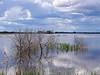 El beso (Jesus_l) Tags: españa agua europa ciudadreal parquenatural daimiel tablasdedaimiel jesusl