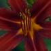 Flower misc 4