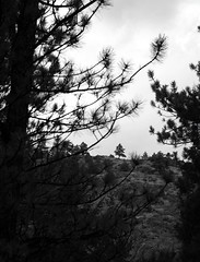 A Distant Tree atop the Canyon Wall (Miss Marisa Renee) Tags: camping trees summer blackandwhite scale nature monochrome digital canon outdoors grey colorado framed branches rocky august canyon pines rockymountains needles distance campsite digitalphotography latesummer poudrecanyon canon400d canoneosxti marisarenee