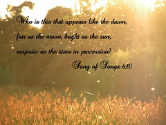 Song of Songs 6:10 (Sapphire Dream Photography) Tags: life light inspiration love church nature field sparkles glitter bug stars religious lights star truth power christ god song glory religion jesus bugs christian sparkle mosquito fields wilderness lover mosquitos religions firefly songs scripture christians gospel beloved bibles testimony swarm solomon 43 scriptures verse verses fireflies oldtestament holyspirit lightningbug testament songofsolomon bibleverse godsword songofsongs testimonies mufflehead holyinspiration muffleheads
