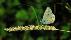 Bir mola (Atakan Eser) Tags: nature butterfly bug insect kelebek tabiat dsc3407 doğa
