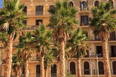 Palmeras (Joanna pictures this) Tags: barcelona desktop travel summer wallpaper spain espana backgrounds wallpapers espanya desktophintergrund placadespanya bckground