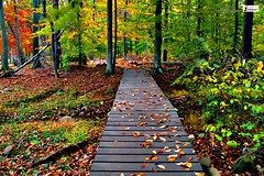 Autumn forest wallpaper (Infoway LLC - Website Development Company) Tags: wallpaper beautiful wonderful nice superb awesome images exotic hd illustrator incredible breathtaking classy bambooforest mindblowing dryforest amazonrainforest greenforest winterforest woodforest junglewallpaper sunsetwallpaper islandwallpaper summerforest responsivewebsitedesign autumnforestwallpaper subtropicalforestwallpaper waterfallintropicalforest responsivewebdesigncompany mountainsnowforest yellowredautumnforest tropicaldesertisland tropicalforestwithriver