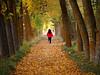 Hacia la luz (Jesus_l) Tags: españa europa valladolid otoño medinaderioseco canaldecastilla jesusl