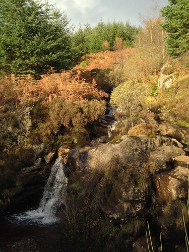 Waterfall among the bracken