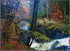 Autumn in the Hermitage (eric robb niven) Tags: walking scotland dundee hermitage dunkeld riverbraan ericrobbniven pentaxk50