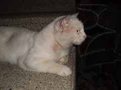 Mystic (universalcatfanatic) Tags: cats white house night stairs cat dark concrete grey back stair gray cement steps step mystic lay laying