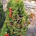 Trees_of_Loop_360_2013_067