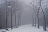 Disegno invernale - Winter drawing. (sinetempore) Tags: street trees winter mist snow fog alberi torino strada streetlamp branches neve nebbia turin rami lampione foschia anawesomeshot invenro winterdrawing mygearandme disegnoinvernale