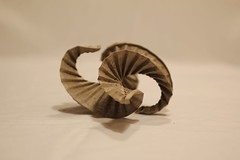 Flattened Pleats (Jophish126) Tags: sculpture elephant art paper spiral origami chaos natural hide edge organic forced tessellation expansion curvature pleats pleating pleat elephanthide