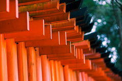 toriis #4 (jam343) Tags: japan 50mm kyoto shrine 京都 torii 鳥居 fushimiinari fushimi fushimiinaritaisha 稲荷 伏見稲荷大社 伏見稲荷 fushimiinarishrine 伏見 千本鳥居 toriigates 1000toriis