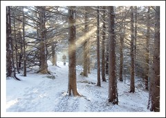 Encounter with Light (Joe Franklin Photography) Tags: winter snow mountains cold ice wind hiking northcarolina blueridge appalachiantrail westernnorthcarolina roanmountain winterhiking joefranklin almostanything wwwjoefranklinphotographycom
