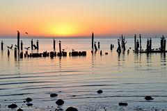 19/365 {PA-light} (Kim Stevens) Tags: ocean seagulls water birds sunrise