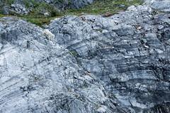 _MG_4362a (markbyzewski) Tags: alaska kids ugly mountaingoats glacierbaynationalpark