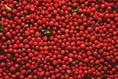 Chiltepines. Hermosillo, Sonora, Mxico. (Arturo Lutz Ley) Tags: ranch red arizona food chihuahua hot sonora sierra gift regalo rancho caliente tradicional chiltepines