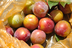 Plums in a Bag (Asif Saeed [....DOCUMENTING PAKISTAN...]) Tags: green fruits vegetables animal swan health healthyfood