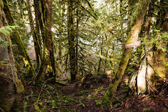 Sahtlam Lodge Rainforest Sign (Sean Maynard) Tags: canada tree nature moss rainforest britishcolumbia vancouverisland cowichan temperaterainforest transcanadatrail