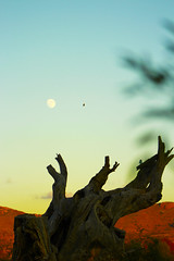 Luna y Desierto (Checker Morgendorffer) Tags: chihuahua mexico desert wild menonitas amish cuauhtemoc manzanas carretera crossroads flowers flores invierno winter north photography class